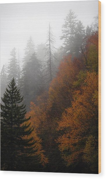 Early Morning Fog Smoky Mountains Wood Print by John Saunders