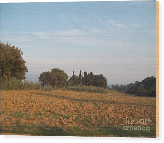 Early Morning In Loppiano Wood Print