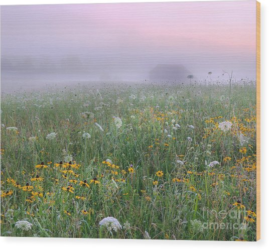 Early Morning Meadow Wood Print