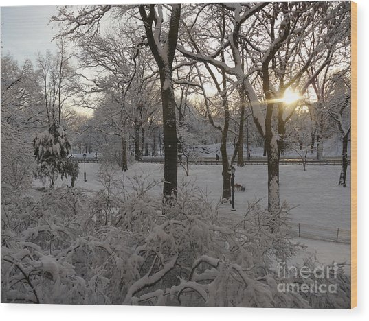 Early Morning Sun In Central Park.  Wood Print