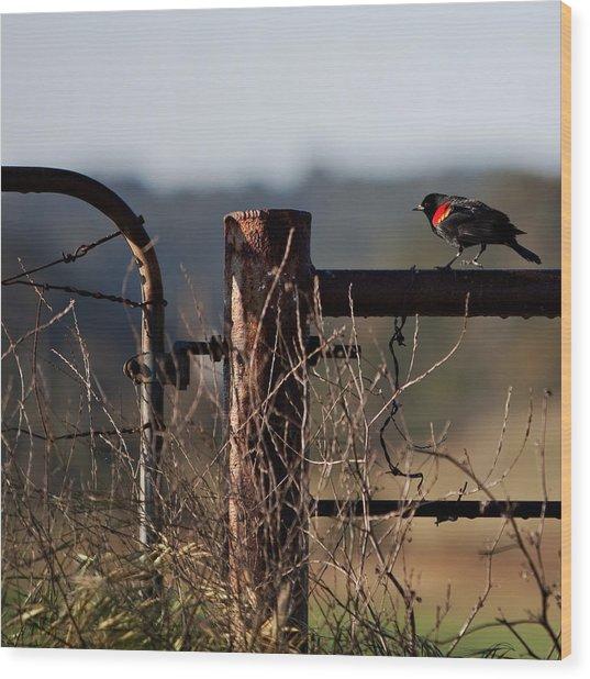 Eary Morning Blackbird Wood Print