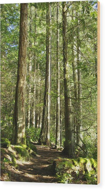 East Sooke Park Trail Wood Print