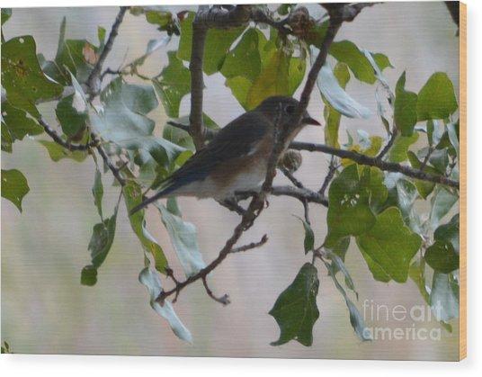 Eastern Bluebird Wood Print by Ruth  Housley