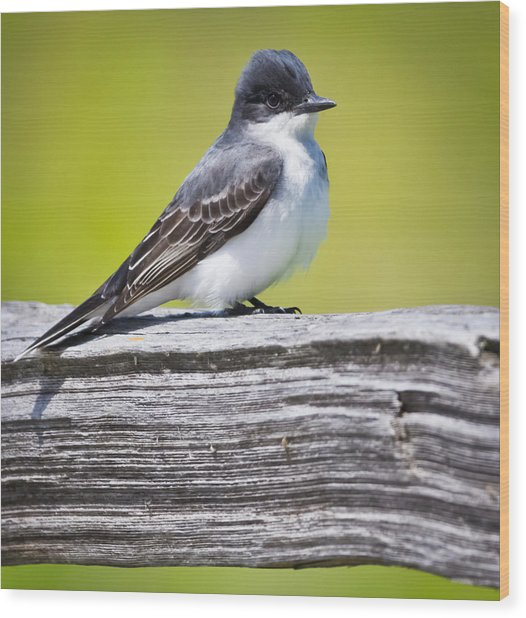 Eastern Kingbird Wood Print by Ricky L Jones