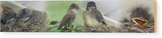 Eastern Phoebe Family Wood Print
