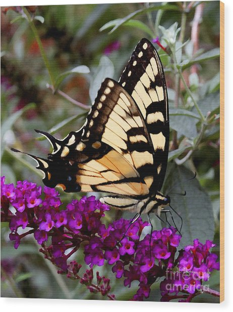 Eastern Tiger Butterfly Wood Print