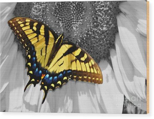Eastern Tiger Swallow Tail  Wood Print