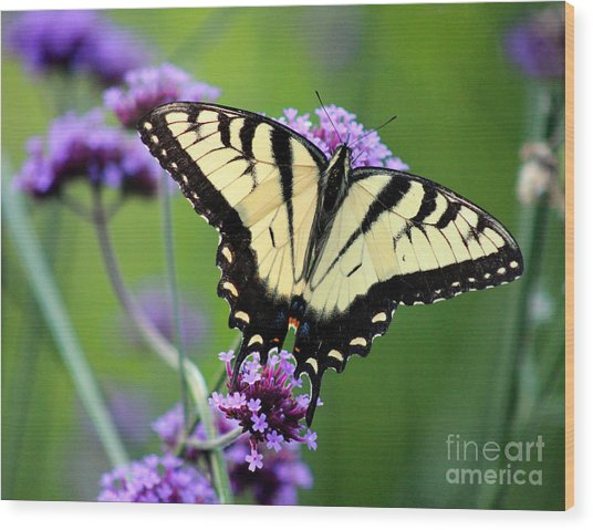 Eastern Tiger Swallowtail Butterfly 2014 Wood Print