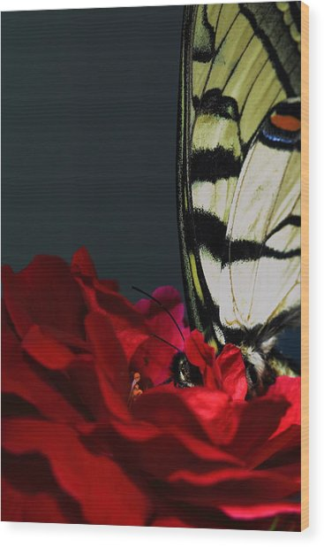 Eastern Tiger Swallowtail Wood Print by Cody Arnold