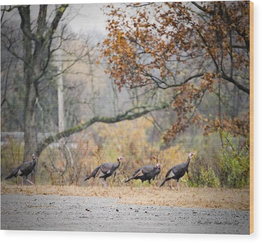 Eastern Wild Turkey  Wood Print
