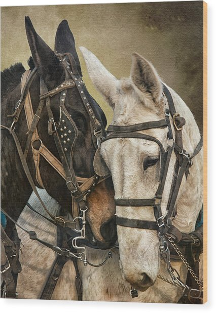 Ebony And Ivory Wood Print by Ron  McGinnis