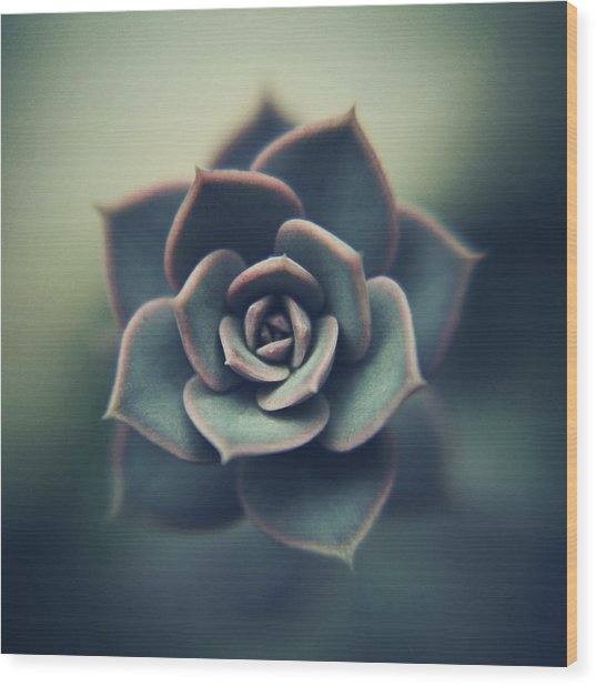 Echeveria Macro Wood Print by Con Ryan