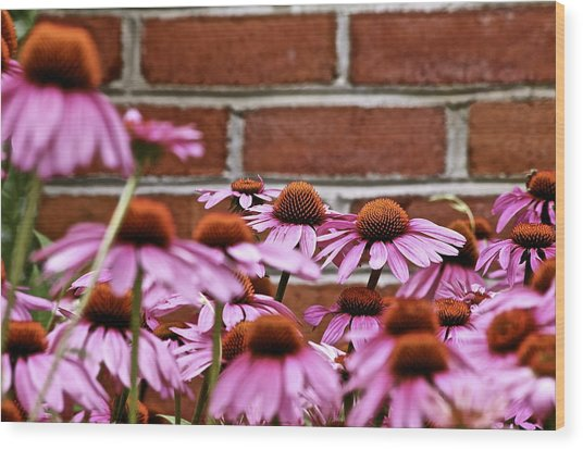 Echinacea And Brick Wall Wood Print