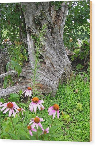 Echinacea Stumpage Wood Print