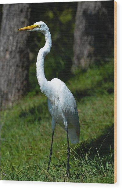 Egret - Full Length Wood Print