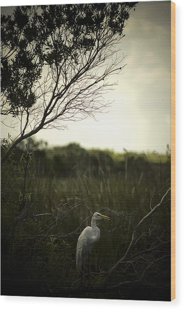 Egret At Sunset Wood Print