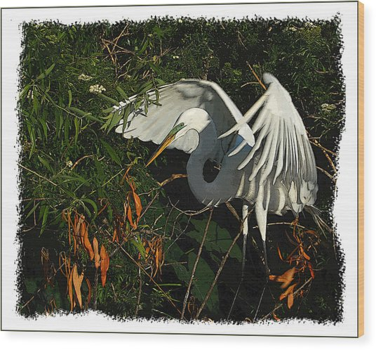 Egret Beauty Wood Print by Wynn Davis-Shanks