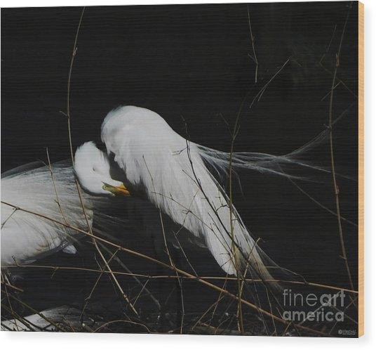 Egret Bird City At Avery Island Louisiana Wood Print