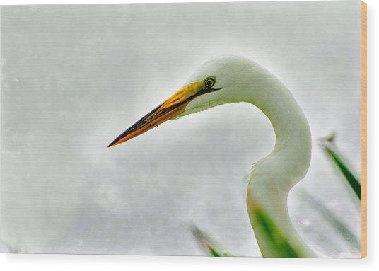 Egret Close-up Wood Print