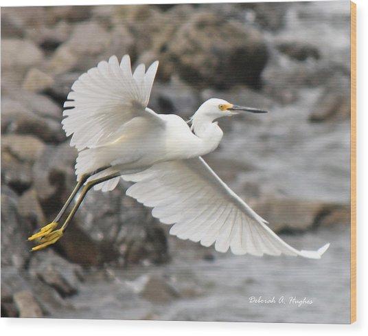 Egret Flight Wood Print