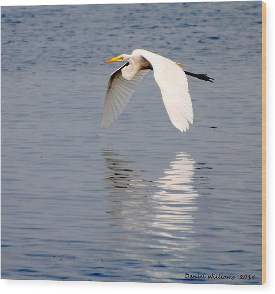 Egret Flying At Harkers Island Wood Print