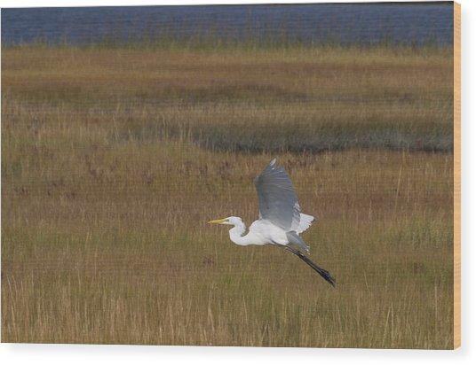 Egret In Flight Over Swamp Grass Wood Print