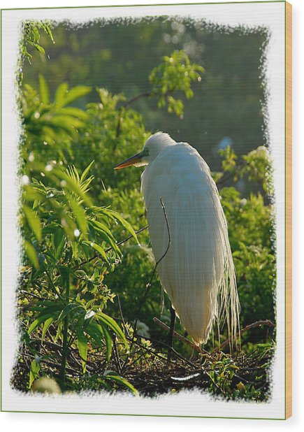 Egret Morning Wood Print by Wynn Davis-Shanks