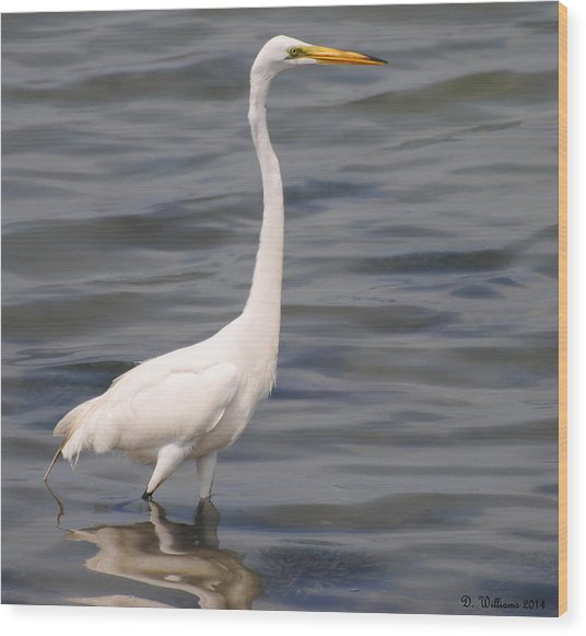 Egret On Alert Wood Print