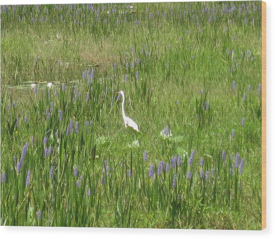 Egret On The Lake Wood Print