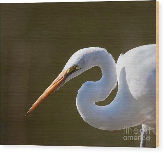 Egret Portrait-2 Wood Print