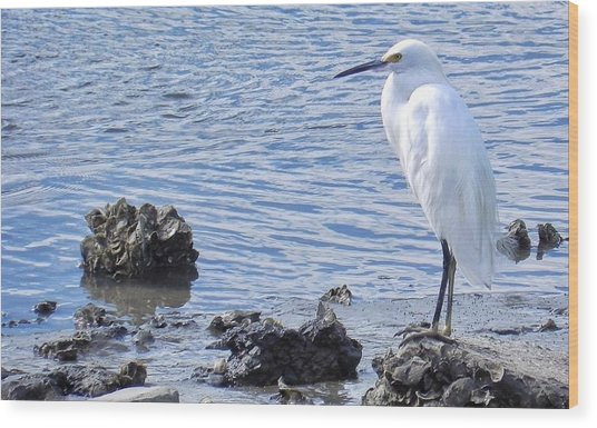 Egret Standing Perfectly Still Wood Print