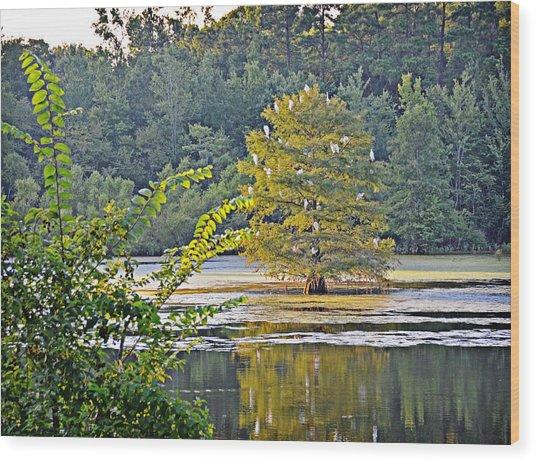 Egret Tree Wood Print