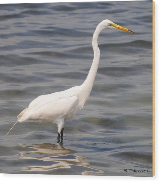 Egret Wading And Watching Wood Print