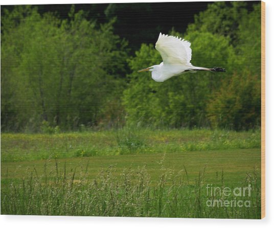 Egret's Flight Wood Print