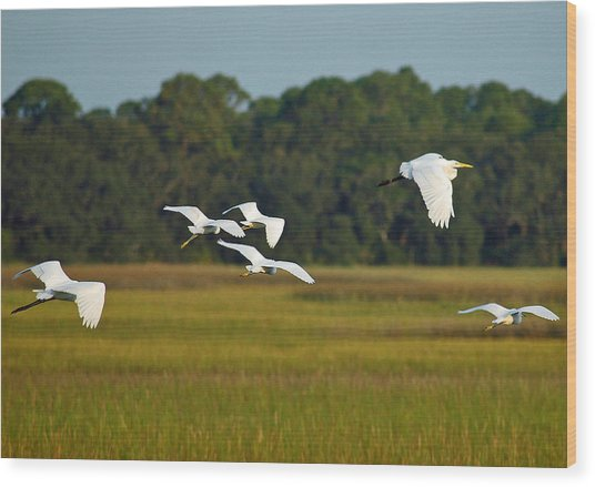 Egrets In Flight On Jekyll Island Wood Print