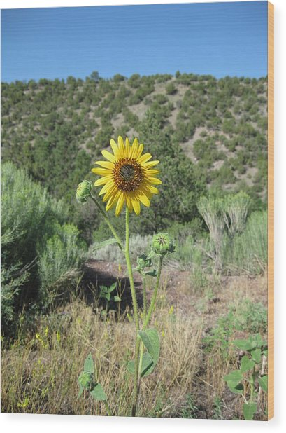 Elated Sunflower Wood Print