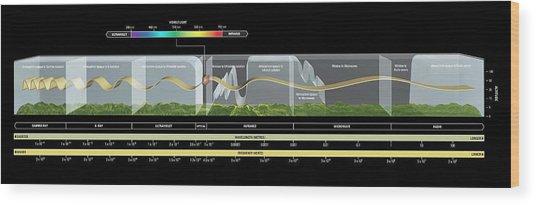 Electromagnetic Spectrum Wood Print