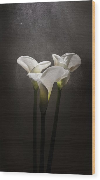 Elegance Wood Print by Ivan Vukelic