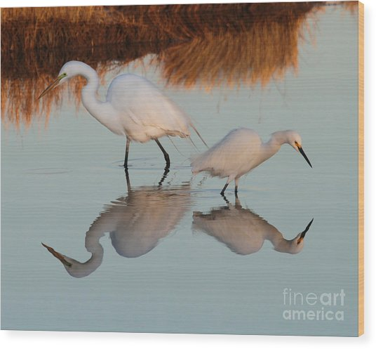 Elegant Big And Small Great White And Snowy Egrets Wood Print