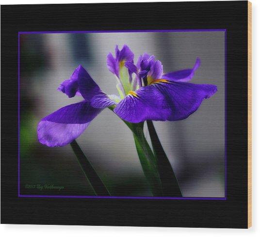 Elegant Iris With Black Border Wood Print