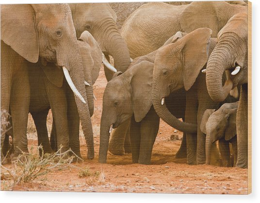 Elephant At The Hotspot Wood Print