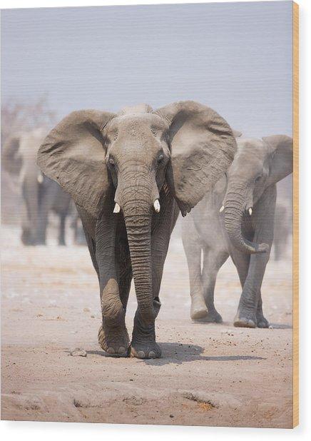 Elephant Bathing Wood Print