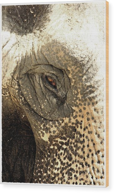 Elephant Eye Wood Print