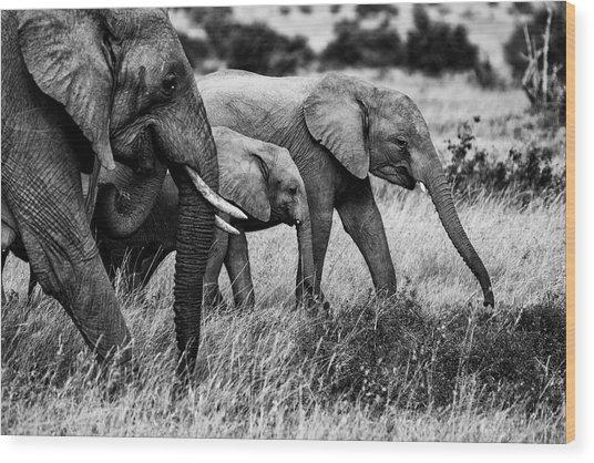 Elephant Family Wood Print by Vedran Vidak