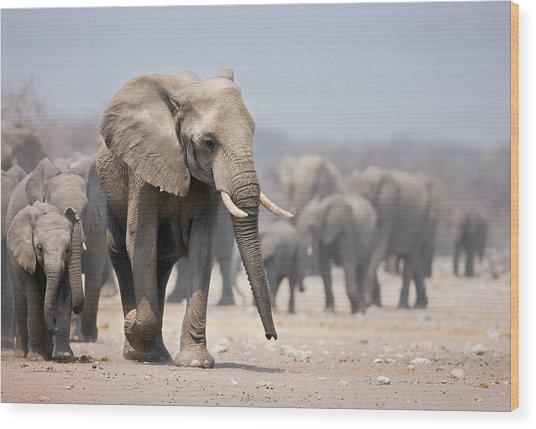 Elephant Feet Wood Print