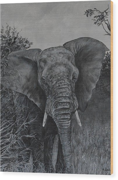 Elephant In African Preserve Wood Print