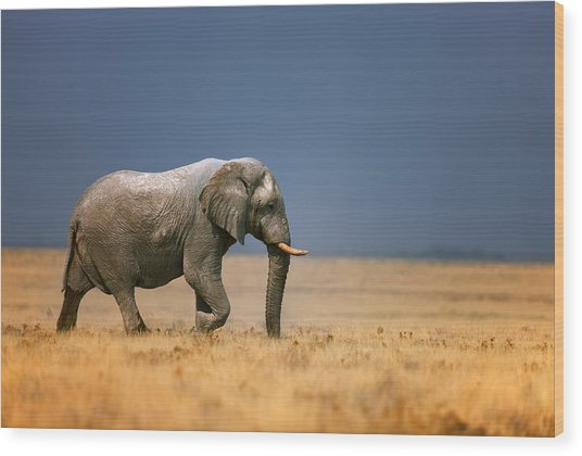 Elephant In Grassfield Wood Print