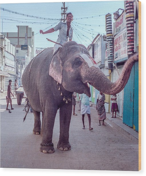 Elephant In The Street In India Wood Print