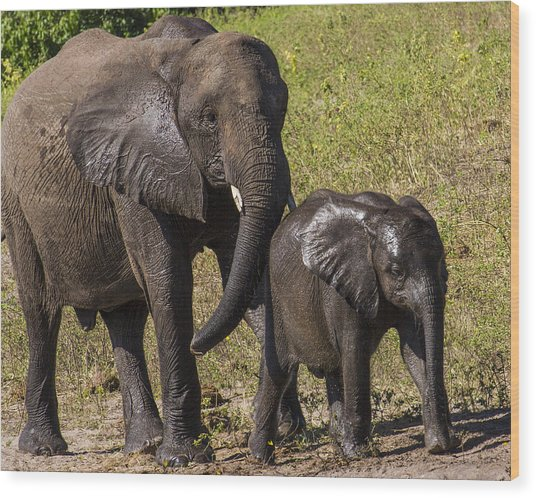 Elephant Mom And Baby Wood Print