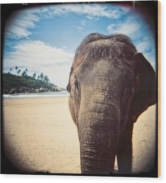 Elephant On The Beach Wood Print
